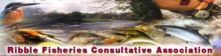 Ribble Fisheries Consultative Association